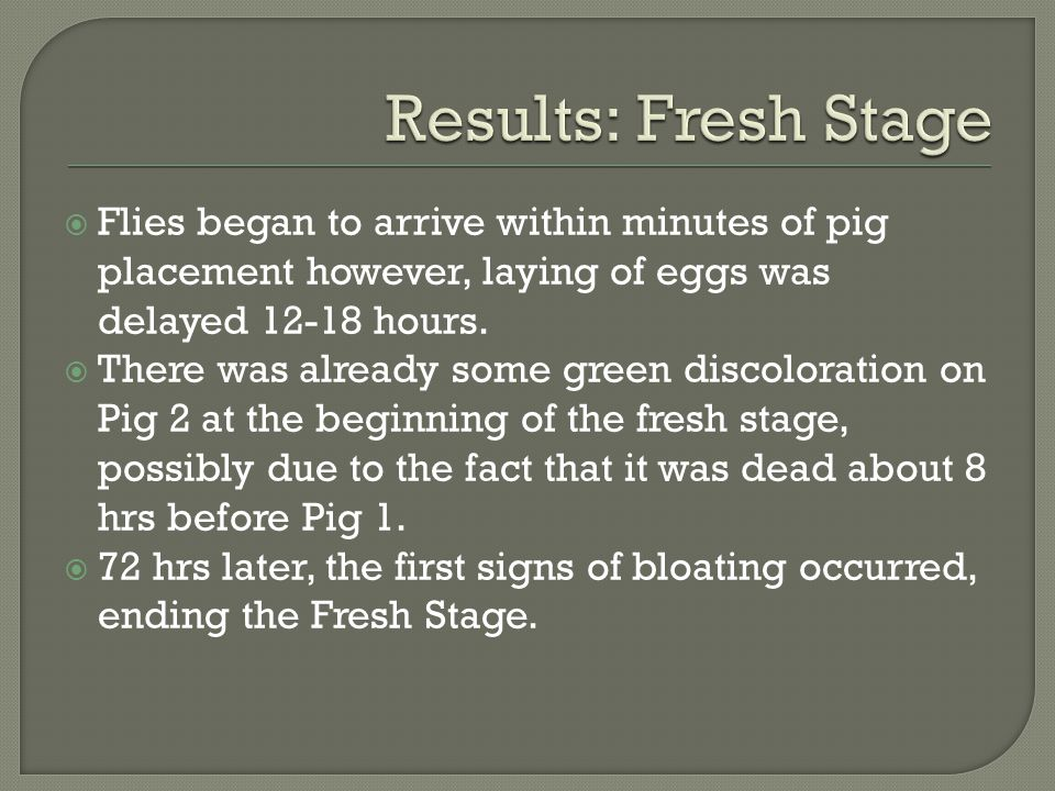  Flies began to arrive within minutes of pig placement however, laying of eggs was delayed 12-18 hours.  There was already some green discoloration