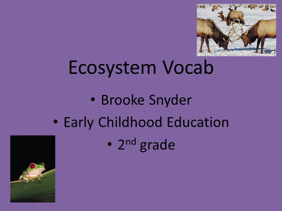 Ecosystem Vocab Brooke Snyder Early Childhood Education 2 nd grade