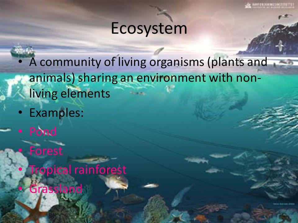 Learning Objectives Students will recognize three vocabulary words based on ecosystems Students will be able to define three vocabulary words based on ecosystems Students will complete the quiz to ensure understanding of the vocabulary words Students will be able to give one example of each of the definitions As a student I CAN!