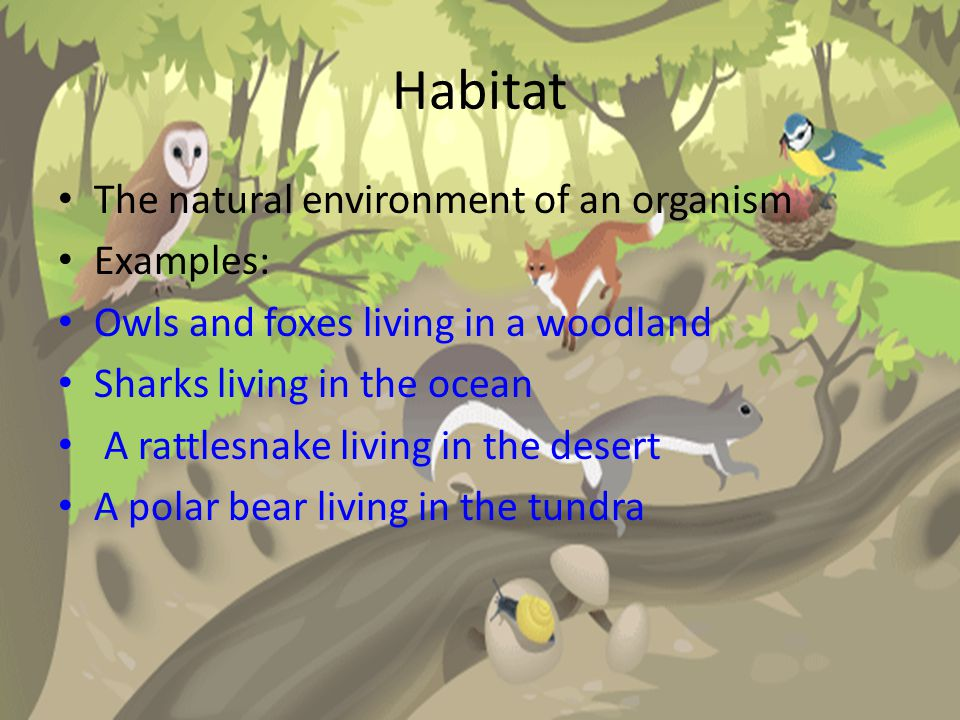 Habitat The natural environment of an organism Examples: Owls and foxes living in a woodland Sharks living in the ocean A rattlesnake living in the desert A polar bear living in the tundra