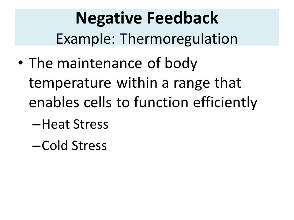Negative Feedback Example: Thermoregulation The maintenance of body temperature within a range that enables cells to function efficiently – Heat Stress – Cold Stress