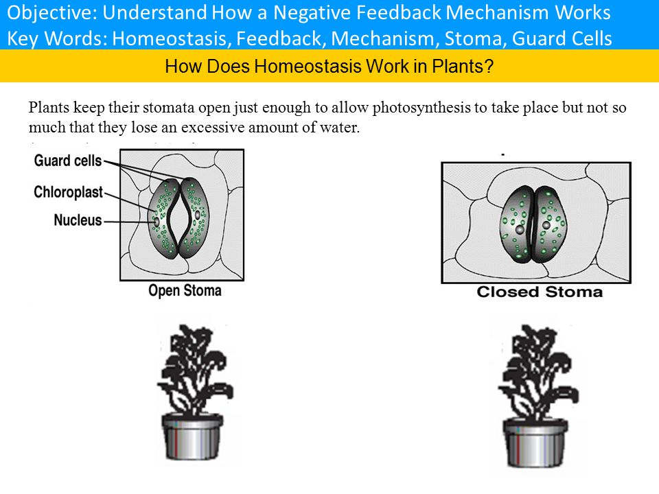 1.Which gases do get into stomata. 2. Which gases do get out from stomata.