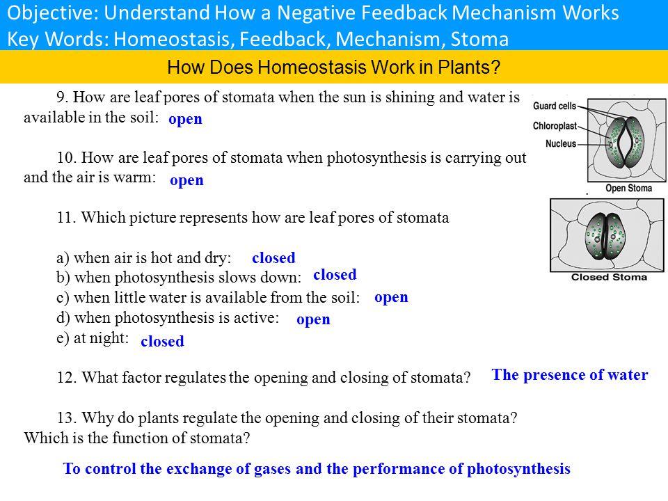 Objective: Understand What a Negative Feedback Look Like Key Words: Homeostasis, Negative Feedback, Insulin, Glucagon, Dynamic Equilibrium