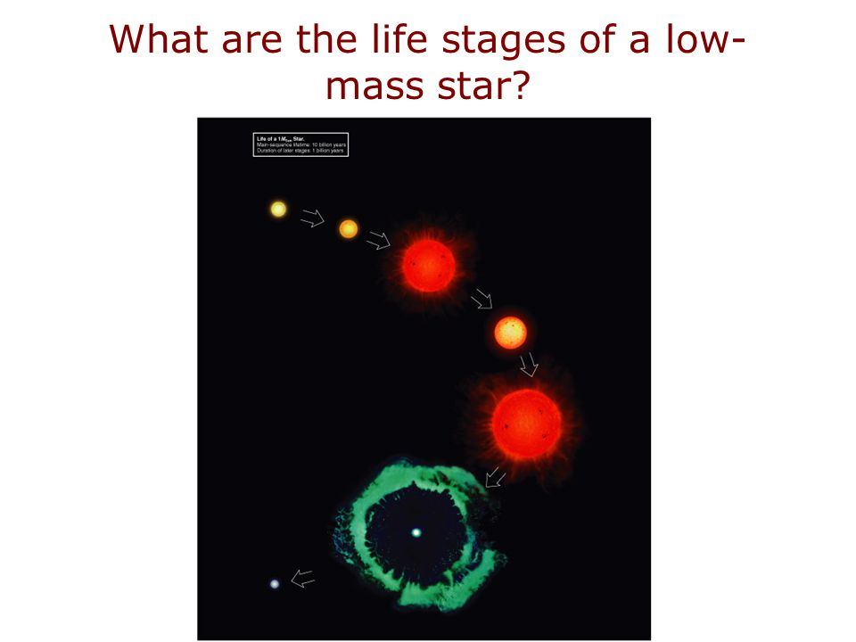 What are the life stages of a low- mass star?