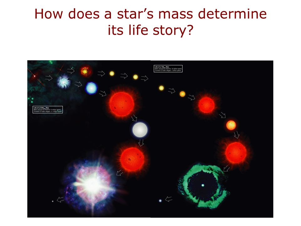 How does a star's mass determine its life story?