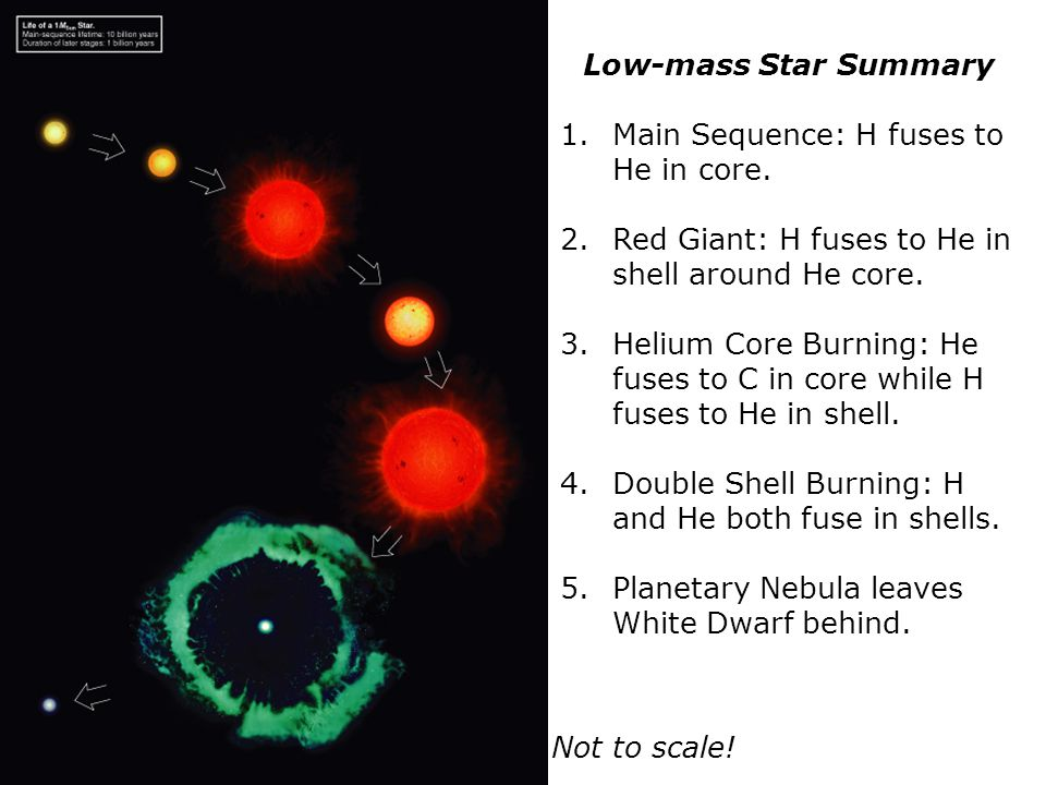 Low-mass Star Summary 1.Main Sequence: H fuses to He in core.