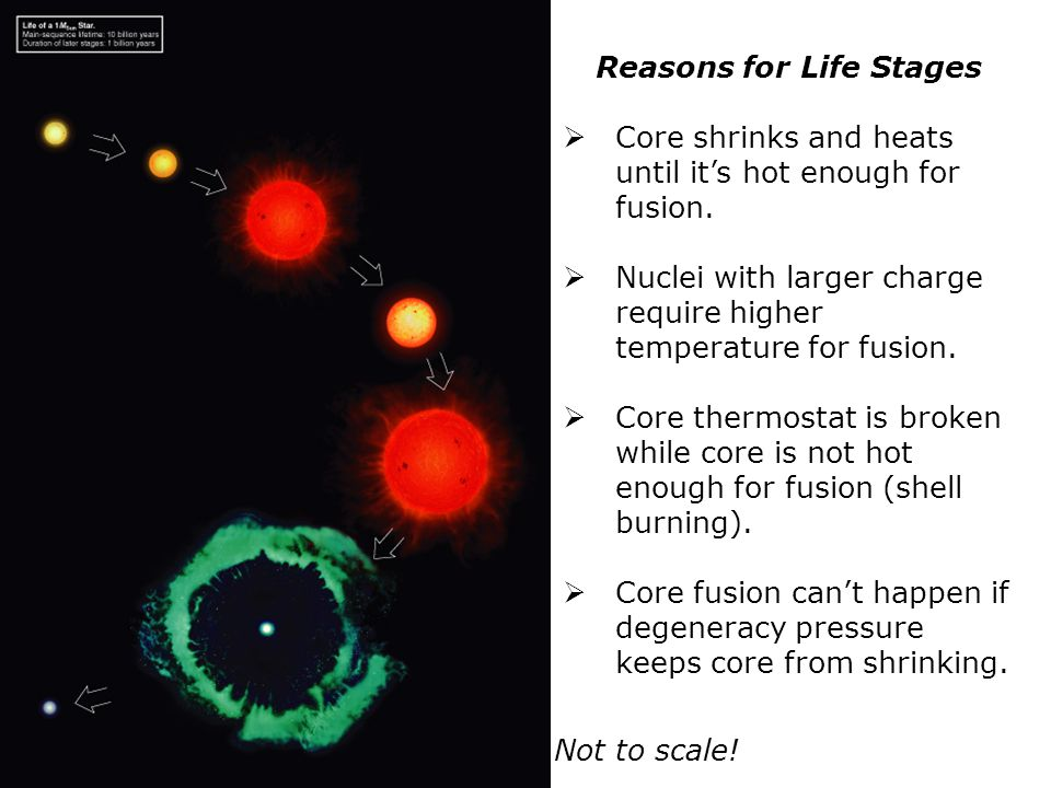 Reasons for Life Stages  Core shrinks and heats until it's hot enough for fusion.  Nuclei with larger charge require higher temperature for fusion.