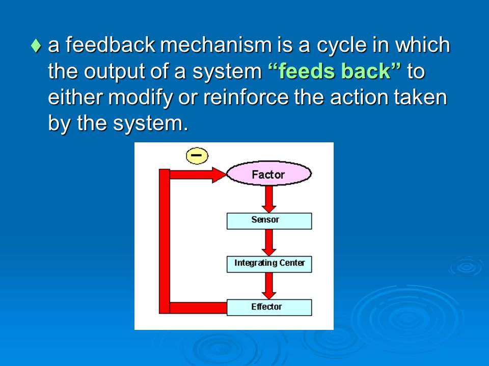  a feedback mechanism is a cycle in which the output of a system feeds back to either modify or reinforce the action taken by the system.