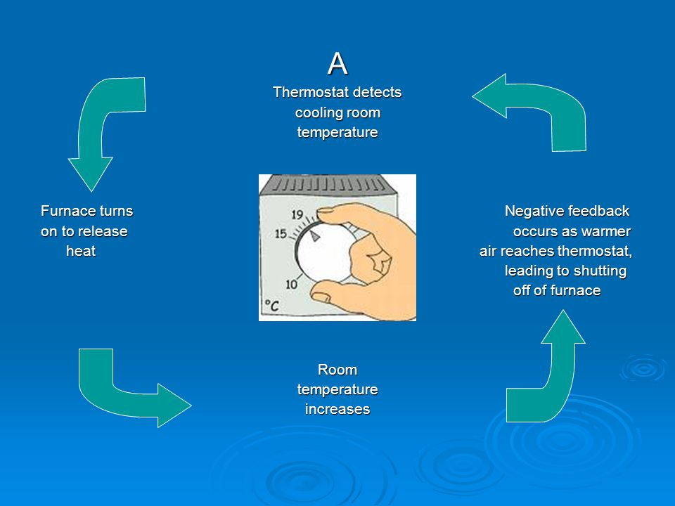 A Thermostat detects cooling room temperature Furnace turns Negative feedback on to releaseoccurs as warmer heat air reaches thermostat, heat air reaches thermostat, leading to shutting leading to shutting off of furnace Roomtemperatureincreases