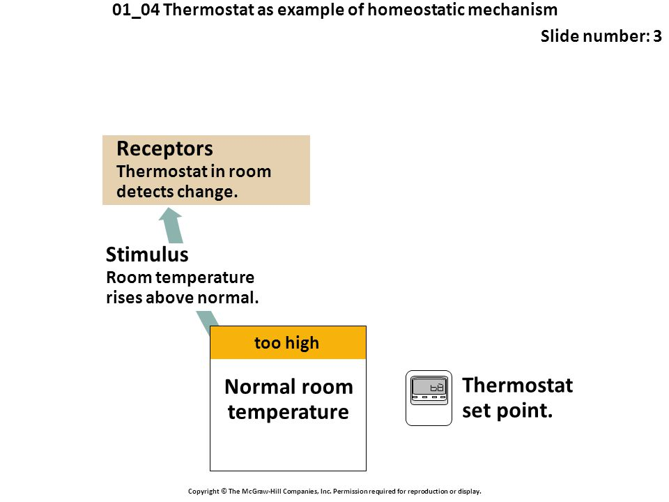 01_04 Thermostat as example of homeostatic mechanism Slide number: 3 Copyright © The McGraw-Hill Companies, Inc. Permission required for reproduction