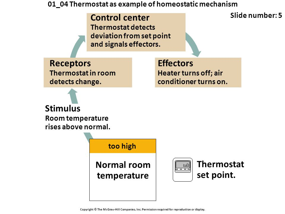 01_04 Thermostat as example of homeostatic mechanism Slide number: 5 Copyright © The McGraw-Hill Companies, Inc. Permission required for reproduction