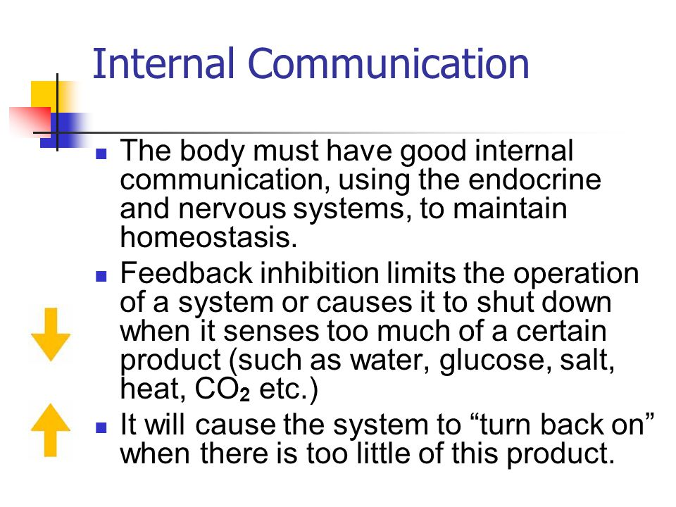 Internal Communication The body must have good internal communication, using the endocrine and nervous systems, to maintain homeostasis. Feedback inhi