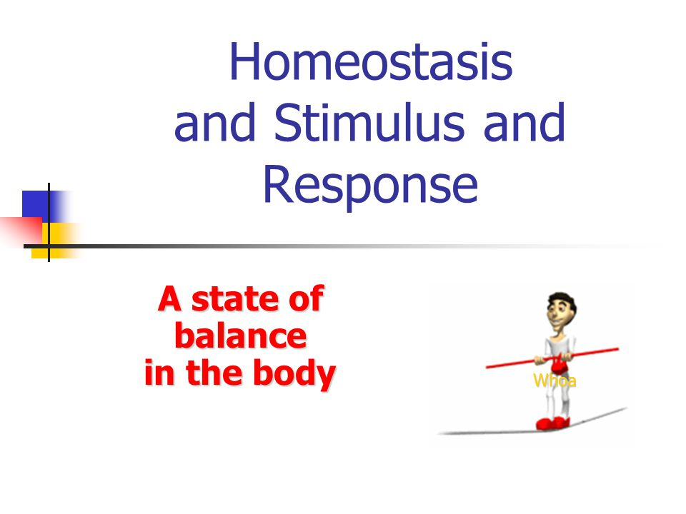 Homeostasis and Stimulus and Response A state of balance in the body Whoa