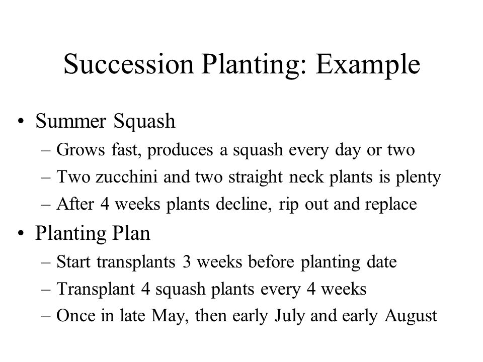 Succession Planting: Example Summer Squash –Grows fast, produces a squash every day or two –Two zucchini and two straight neck plants is plenty –After 4 weeks plants decline, rip out and replace Planting Plan –Start transplants 3 weeks before planting date –Transplant 4 squash plants every 4 weeks –Once in late May, then early July and early August