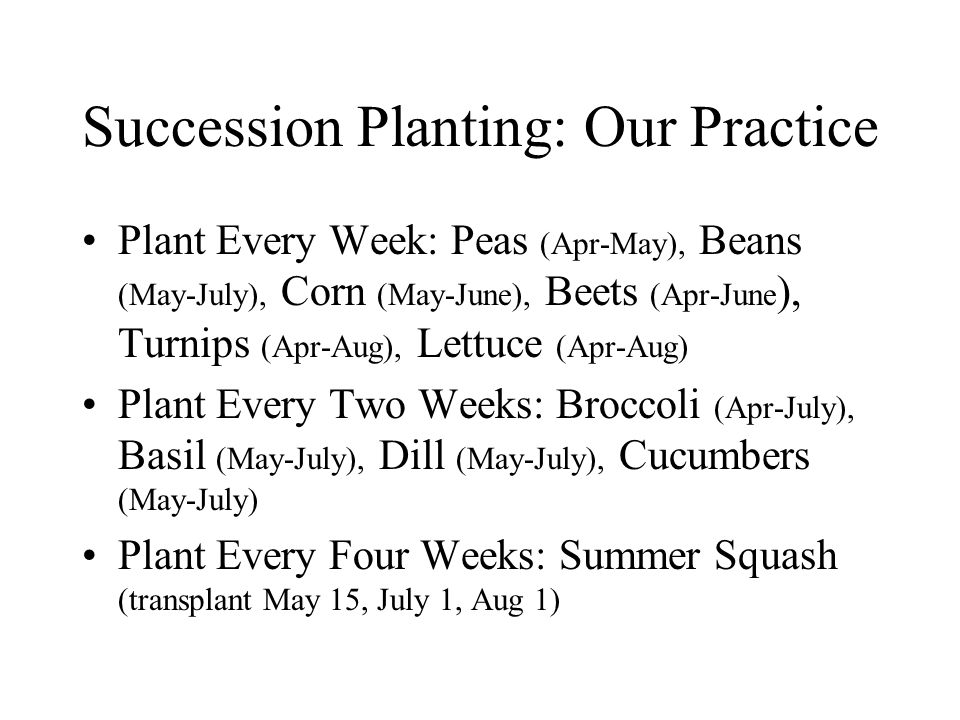 Succession Planting: Our Practice Plant Every Week: Peas (Apr-May), Beans (May-July), Corn (May-June), Beets (Apr-June ), Turnips (Apr-Aug), Lettuce (Apr-Aug) Plant Every Two Weeks: Broccoli (Apr-July), Basil (May-July), Dill (May-July), Cucumbers (May-July) Plant Every Four Weeks: Summer Squash (transplant May 15, July 1, Aug 1)