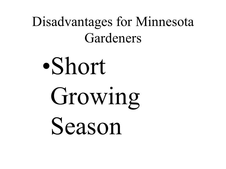 Disadvantages for Minnesota Gardeners Short Growing Season