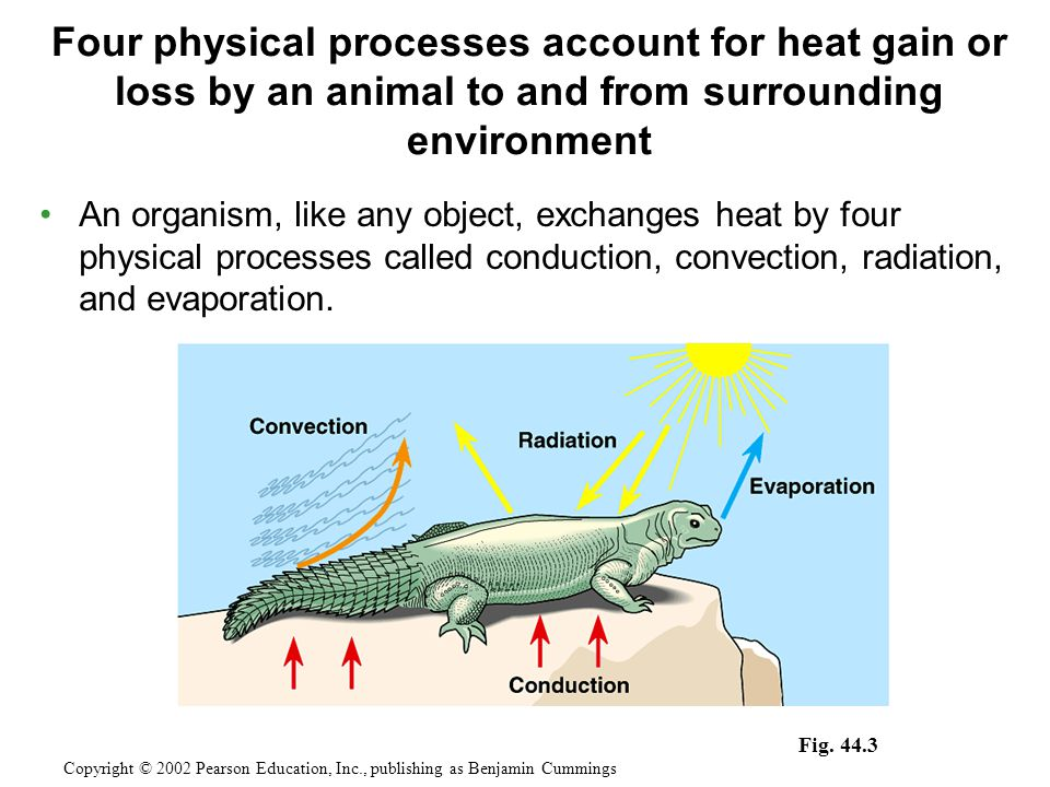 An organism, like any object, exchanges heat by four physical processes called conduction, convection, radiation, and evaporation.