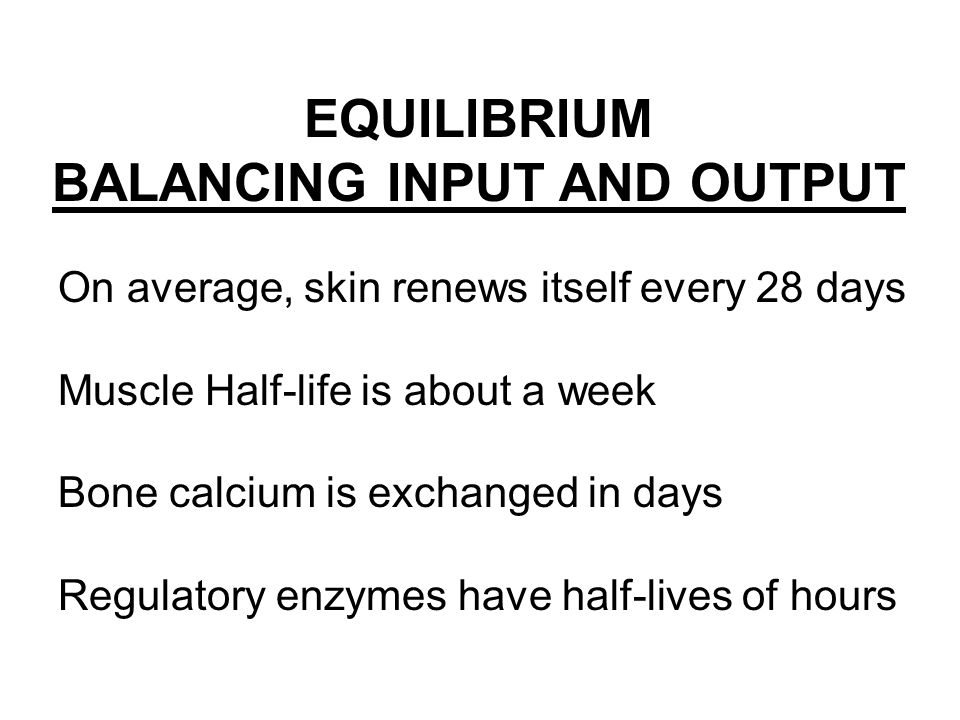 EQUILIBRIUM BALANCING INPUT AND OUTPUT On average, skin renews itself every 28 days Muscle Half-life is about a week Bone calcium is exchanged in days Regulatory enzymes have half-lives of hours