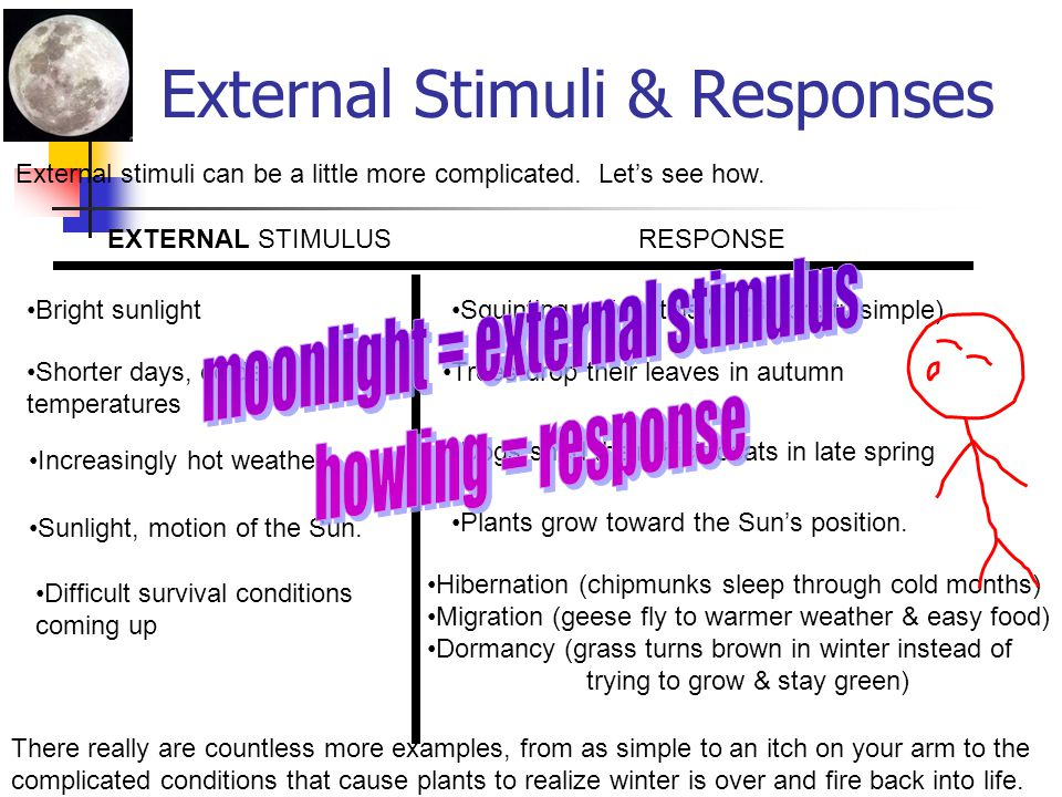 Internal Stimuli & Responses Think of all the changing conditions that an organism might need to respond to. Here's just a sample: And here are some s