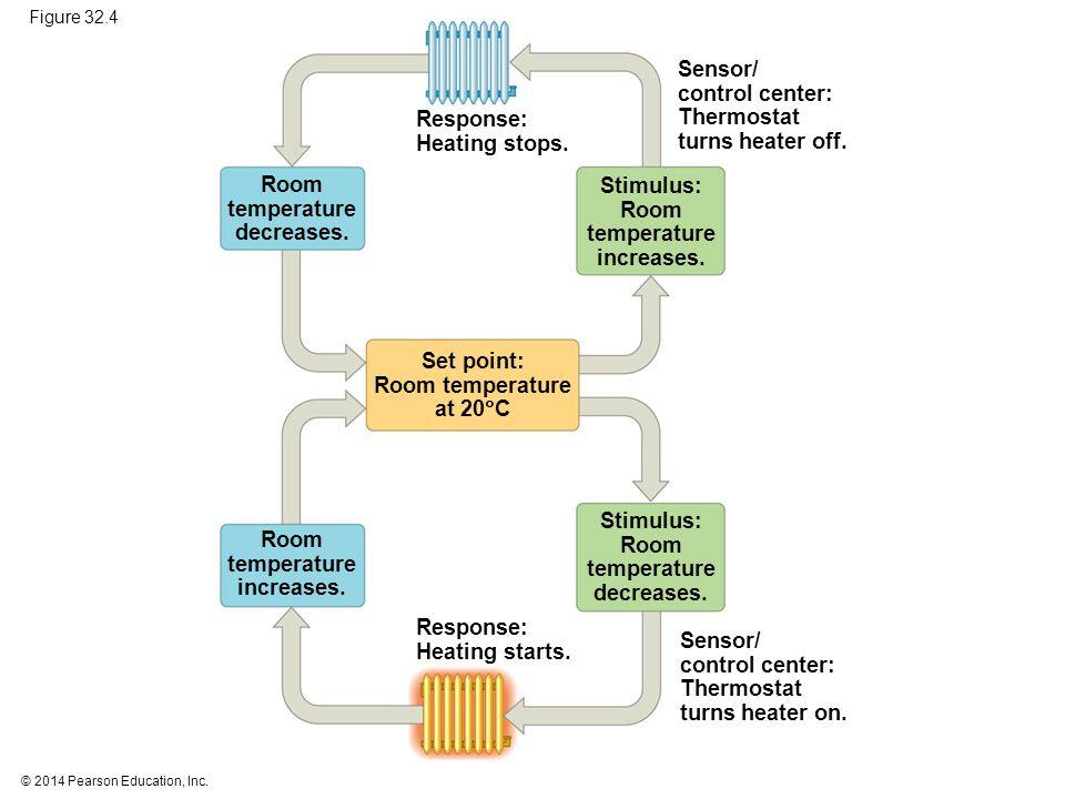 © 2014 Pearson Education, Inc. Figure 32.6 Radiation Convection Evaporation Conduction