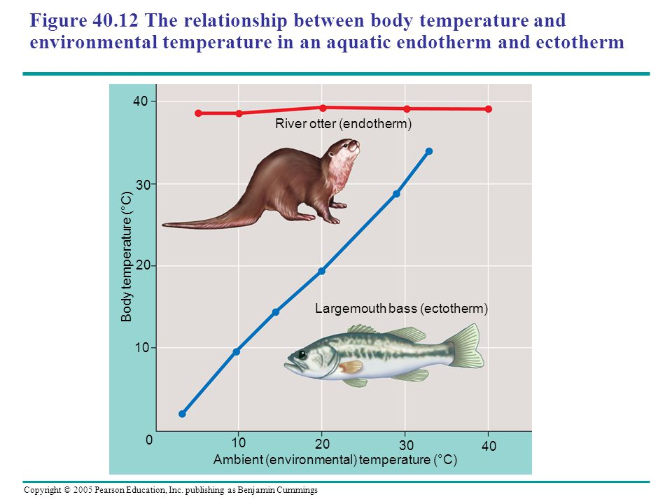 Copyright © 2005 Pearson Education, Inc. publishing as Benjamin Cummings Figure 40.12 The relationship between body temperature and environmental temp
