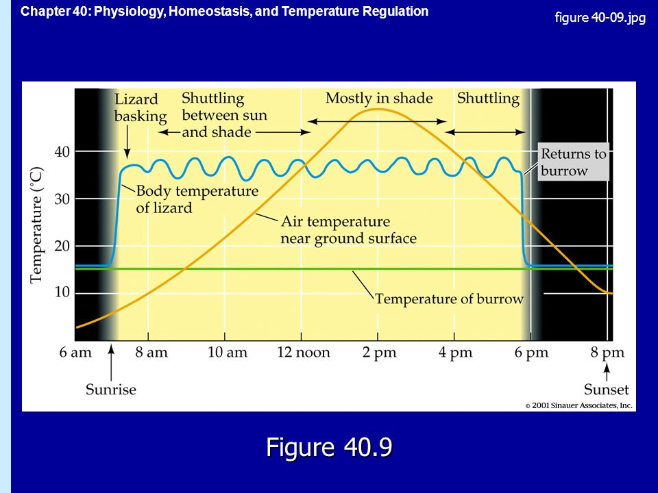 Chapter 40: Physiology, Homeostasis, and Temperature Regulation Figure 40.9 figure jpg