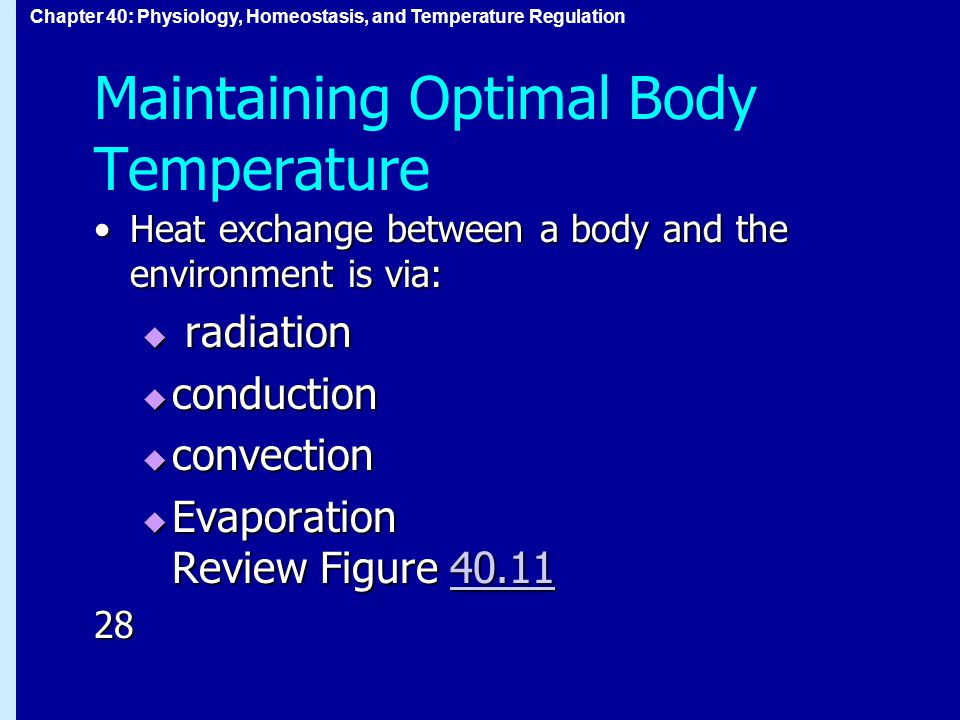 Chapter 40: Physiology, Homeostasis, and Temperature Regulation Maintaining Optimal Body Temperature Heat exchange between a body and the environment is via:Heat exchange between a body and the environment is via:  radiation  conduction  convection  Evaporation Review Figure