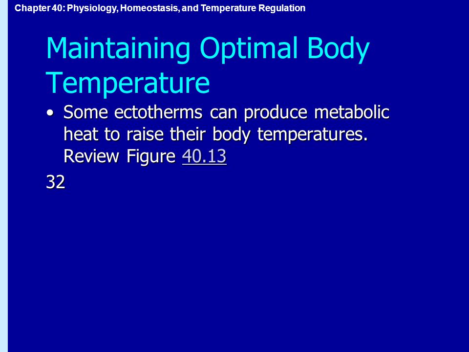 Chapter 40: Physiology, Homeostasis, and Temperature Regulation Maintaining Optimal Body Temperature Some ectotherms can produce metabolic heat to raise their body temperatures.