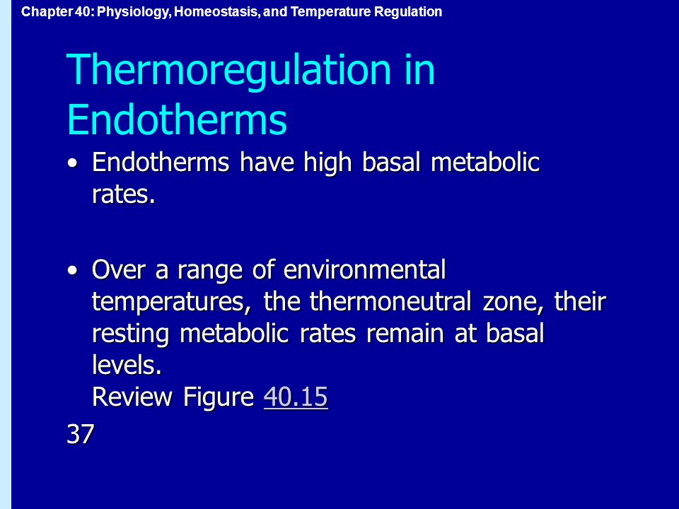 Chapter 40: Physiology, Homeostasis, and Temperature Regulation Thermoregulation in Endotherms Endotherms have high basal metabolic rates.Endotherms have high basal metabolic rates.