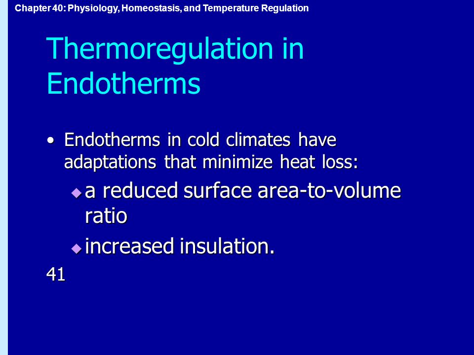 Chapter 40: Physiology, Homeostasis, and Temperature Regulation Thermoregulation in Endotherms Endotherms in cold climates have adaptations that minimize heat loss:Endotherms in cold climates have adaptations that minimize heat loss:  a reduced surface area-to-volume ratio  increased insulation.