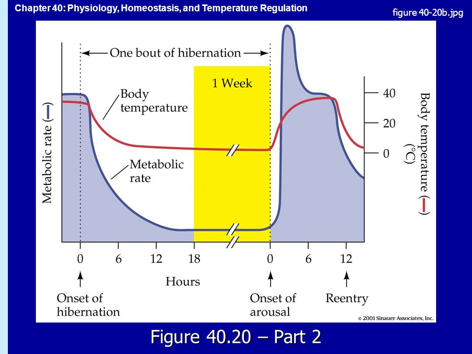 Chapter 40: Physiology, Homeostasis, and Temperature Regulation Figure – Part 2 figure 40-20b.jpg