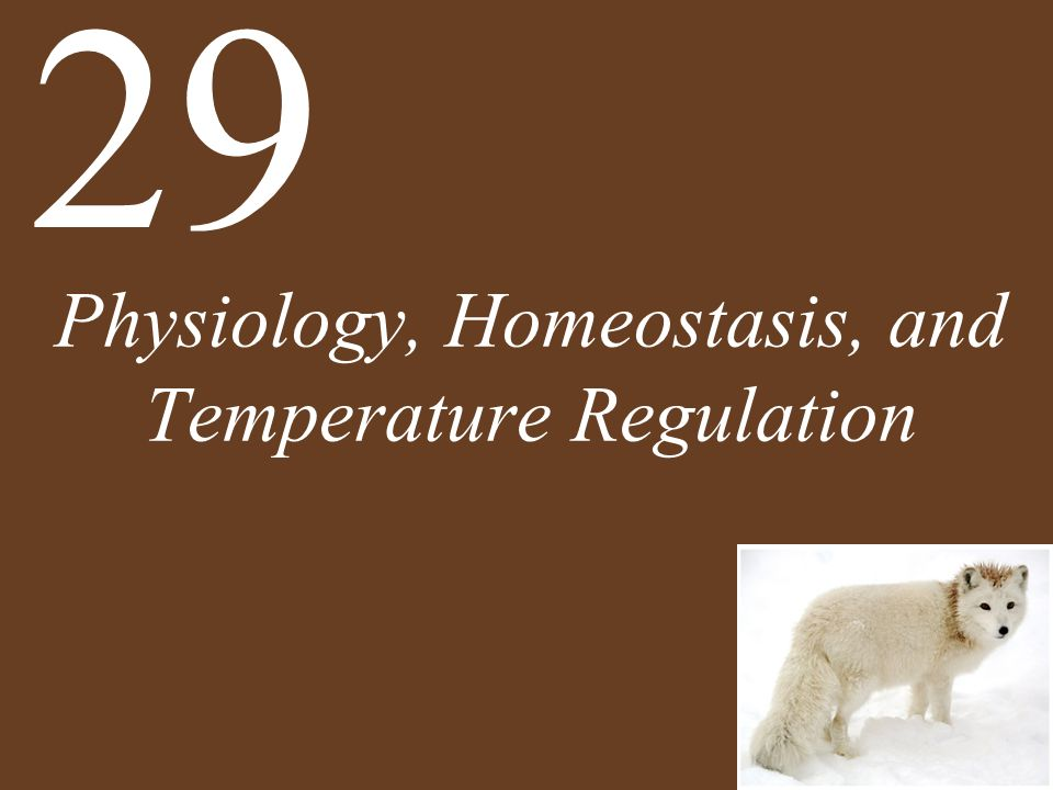 Physiology, Homeostasis, and Temperature Regulation 29