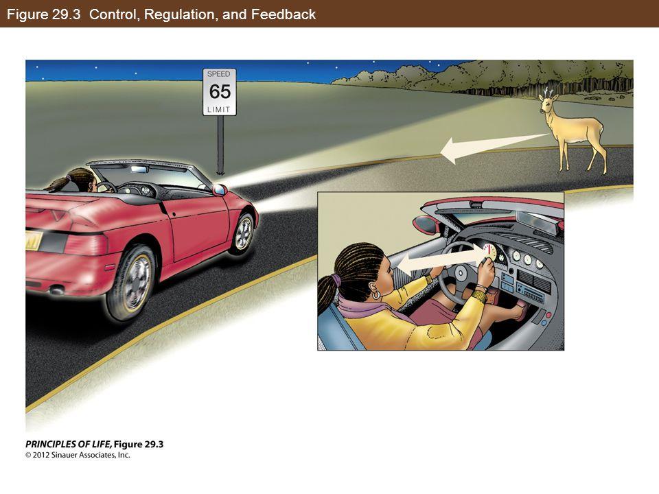 Figure 29.3 Control, Regulation, and Feedback