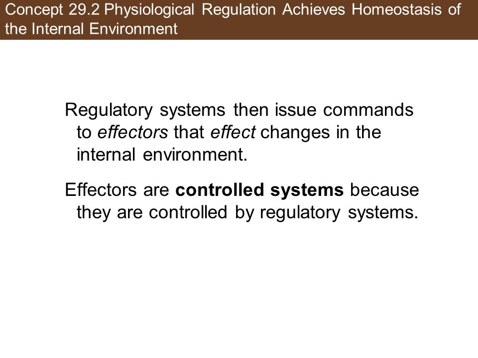 Concept 29.2 Physiological Regulation Achieves Homeostasis of the Internal Environment Regulatory systems then issue commands to effectors that effect changes in the internal environment.
