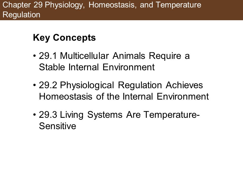 Chapter 29 Physiology, Homeostasis, and Temperature Regulation Key Concepts 29.1 Multicellular Animals Require a Stable Internal Environment 29.2 Phys