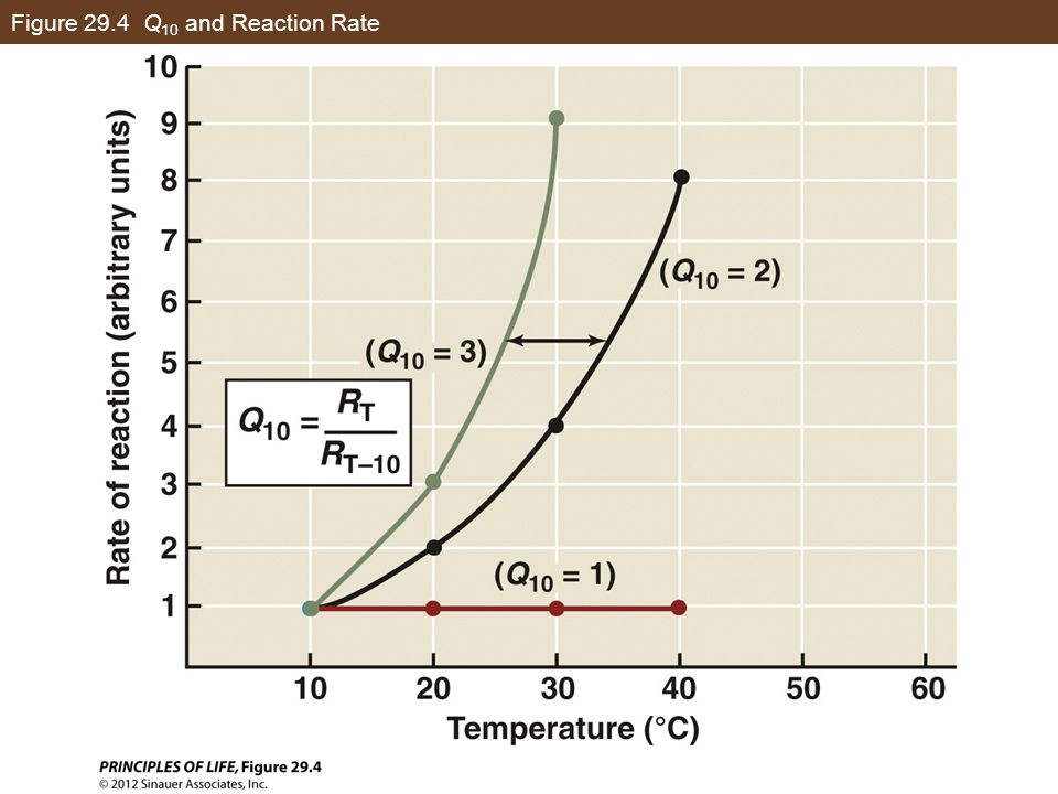 Figure 29.4 Q 10 and Reaction Rate