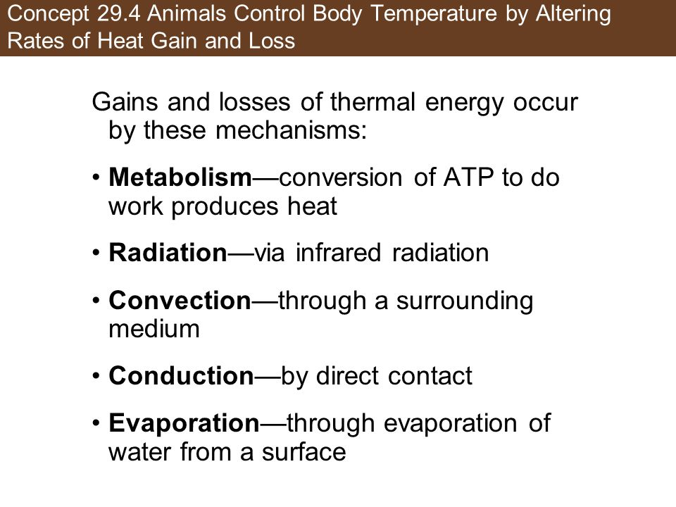 Concept 29.4 Animals Control Body Temperature by Altering Rates of Heat Gain and Loss Gains and losses of thermal energy occur by these mechanisms: Me