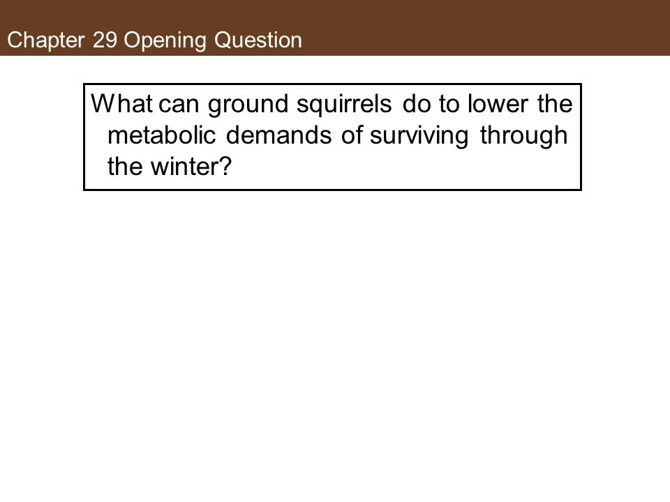 Chapter 29 Opening Question What can ground squirrels do to lower the metabolic demands of surviving through the winter?