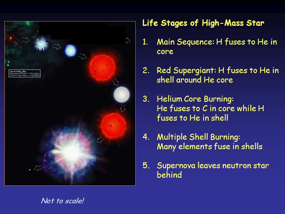 Life Stages of High-Mass Star 1.Main Sequence: H fuses to He in core 2.Red Supergiant: H fuses to He in shell around He core 3.Helium Core Burning: He