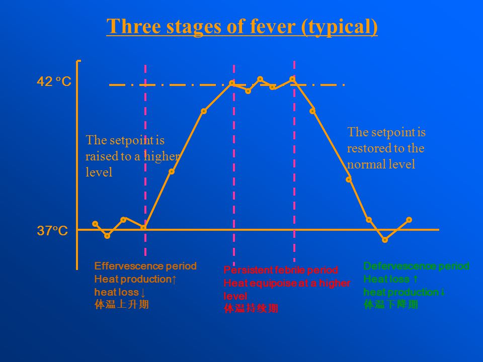 Effervescence period Heat production ↑ heat loss ↓ 体温上升期 Three stages of fever (typical) 37  C 42  C Persistent febrile period Heat equipoise at a h
