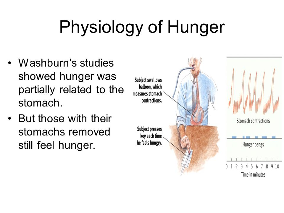 Physiology of Hunger Washburn's studies showed hunger was partially related to the stomach.