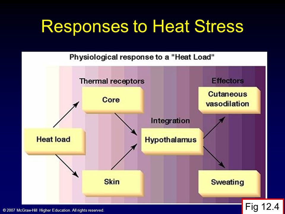 © 2007 McGraw-Hill Higher Education. All rights reserved. Responses to Heat Stress Fig 12.4