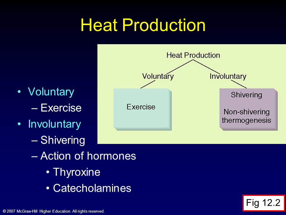 © 2007 McGraw-Hill Higher Education. All rights reserved. Heat Production Voluntary –Exercise Involuntary –Shivering –Action of hormones Thyroxine Cat
