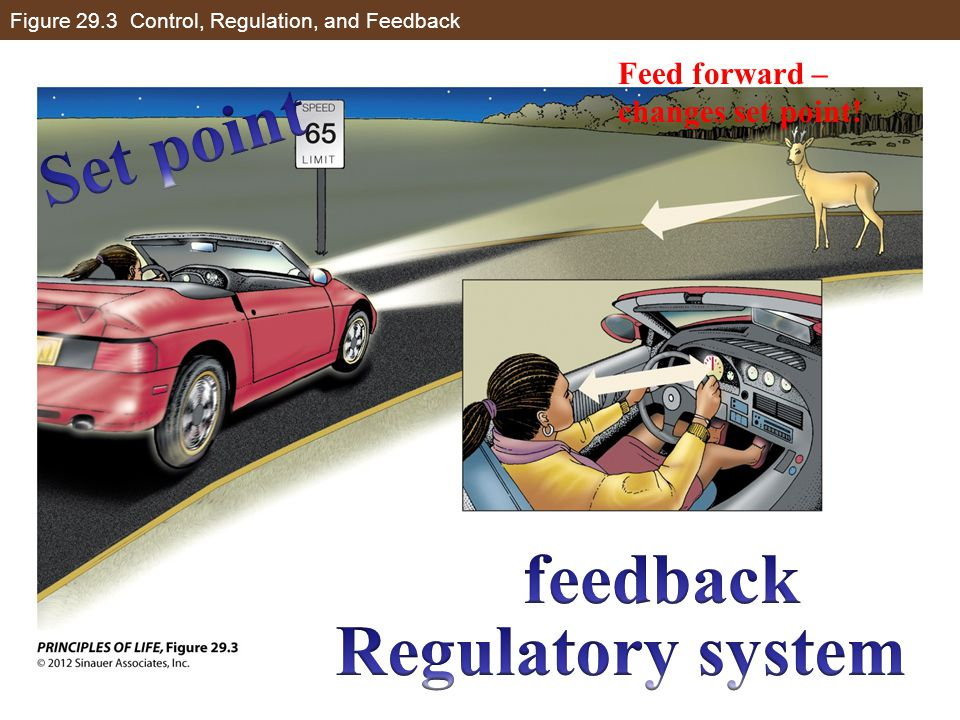 Figure 29.3 Control, Regulation, and Feedback Feed forward – changes set point!