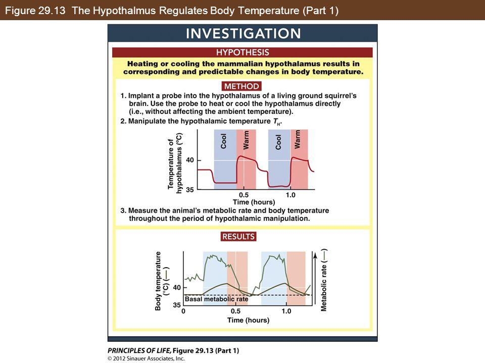 Figure 29.13 The Hypothalmus Regulates Body Temperature (Part 1)