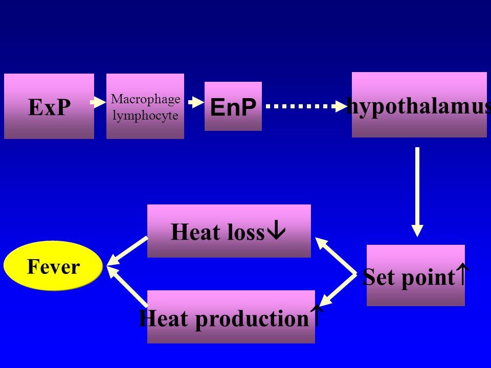 Production of endogenous pyrogens 促肾上腺皮质激素 促皮质激素释放因子