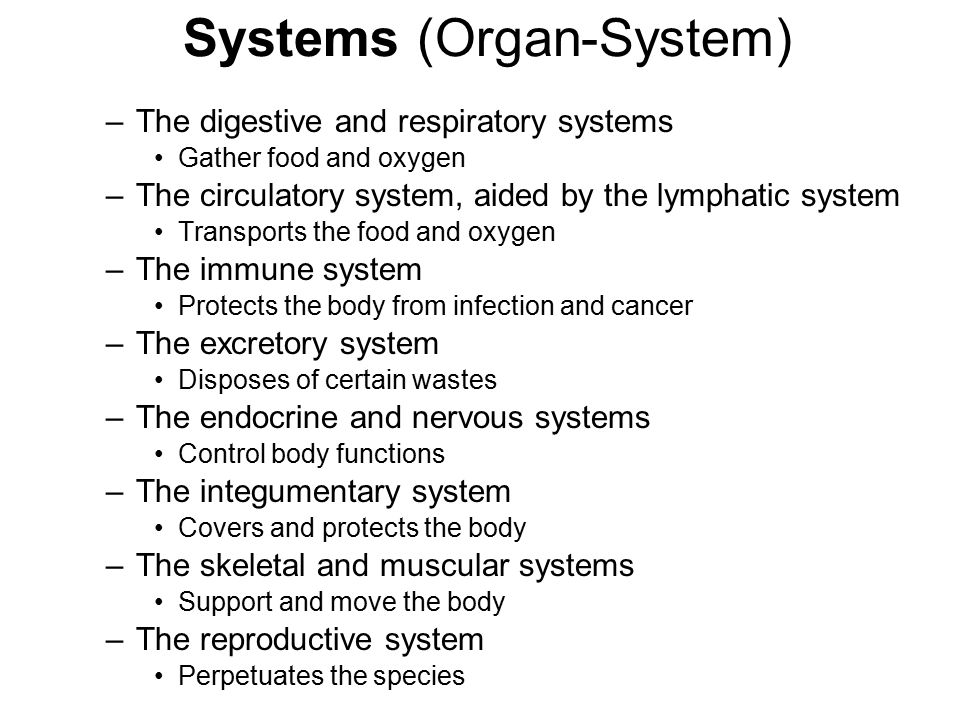 Systems (Organ-System) –The digestive and respiratory systems Gather food and oxygen –The circulatory system, aided by the lymphatic system Transports the food and oxygen –The immune system Protects the body from infection and cancer –The excretory system Disposes of certain wastes –The endocrine and nervous systems Control body functions –The integumentary system Covers and protects the body –The skeletal and muscular systems Support and move the body –The reproductive system Perpetuates the species