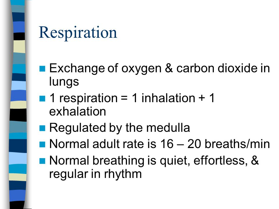 Respiration Exchange of oxygen & carbon dioxide in lungs 1 respiration = 1 inhalation + 1 exhalation Regulated by the medulla Normal adult rate is 16