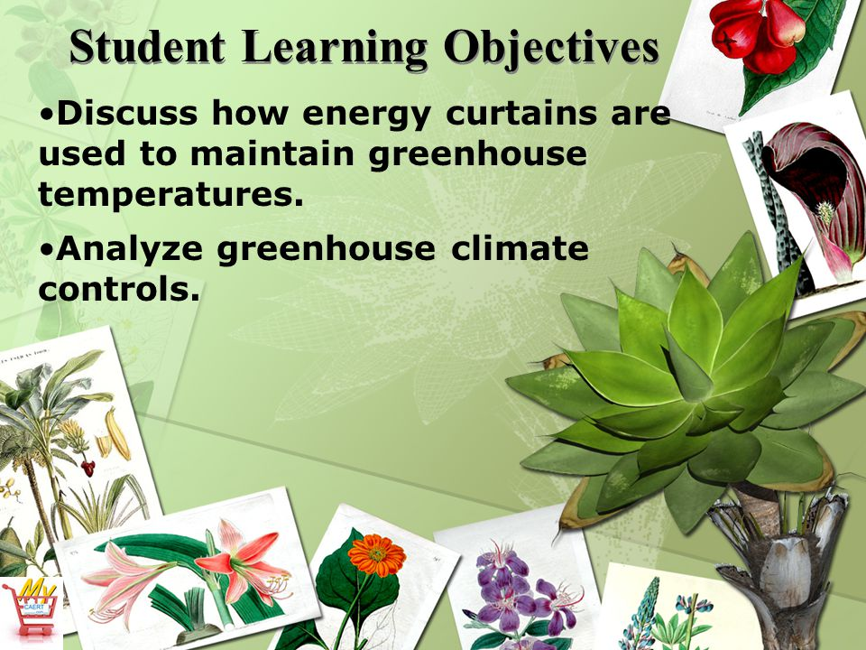 Student Learning Objectives Discuss how energy curtains are used to maintain greenhouse temperatures.