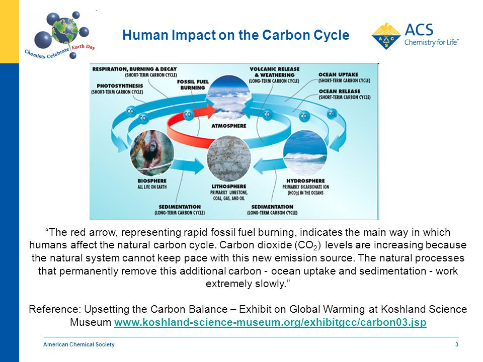 "American Chemical Society 3 Human Impact on the Carbon Cycle ""The red arrow, representing rapid fossil fuel burning, indicates the main way in which h"